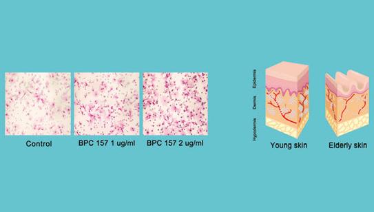 肌肤旧细胞